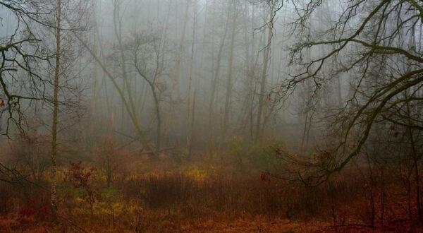 Unser Wald – Impressionen aus Grünheide und Umgebung