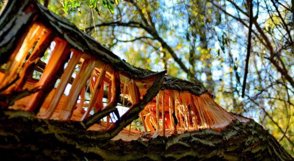 Unser Wald – wunderschöne Details