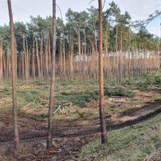 Christoph Raabs (ÖDP): Grüne Liga klagt in Brandenburg völlig zu Recht gegen Abholzung