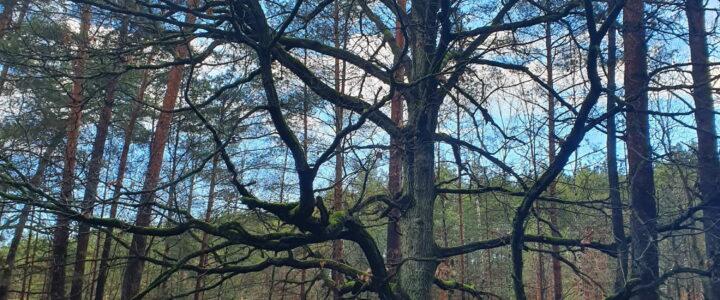 Vom Wald zur Baufläche in nur wenigen Tagen