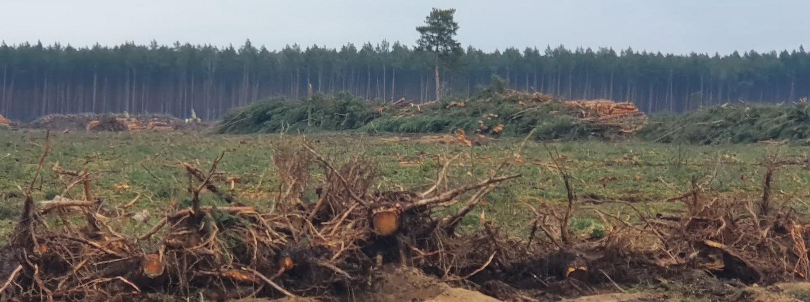 Der Wald ist weg
