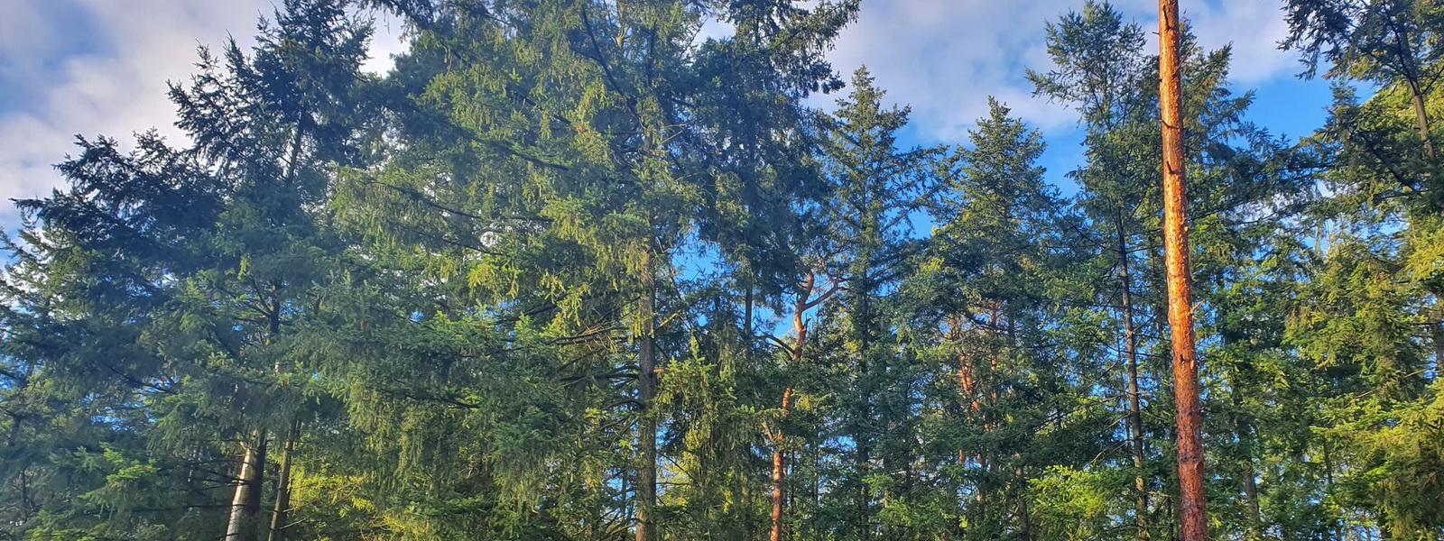 Der Tesla-Wald